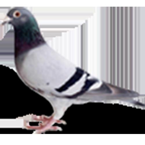 vogels_thumbnail