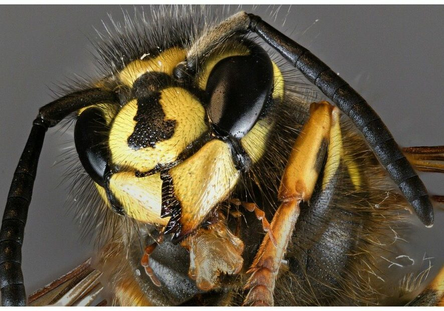 insect-3374622_1280
